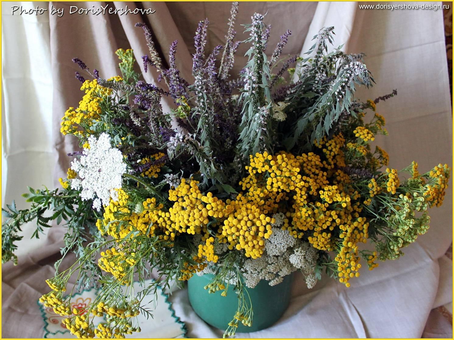 Комнатные растения для домашнего интерьера - Kashevarnya