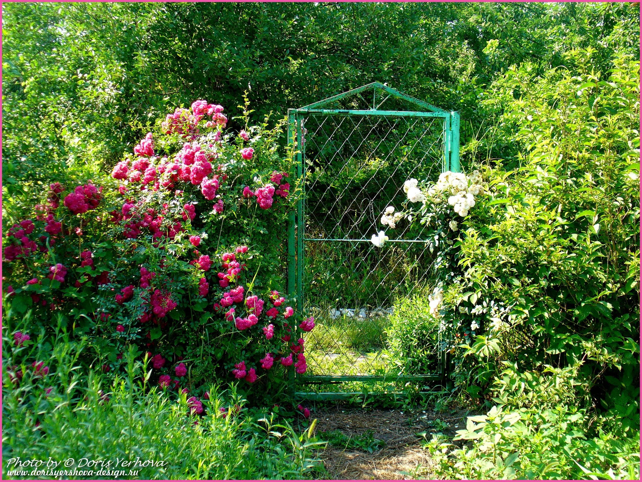 английский коттедж, соломенная кровля, заросший сад английского коттеджа, деревенский стиль сада английского коттеджа, деревенский сад, фото Дорис Ершовой