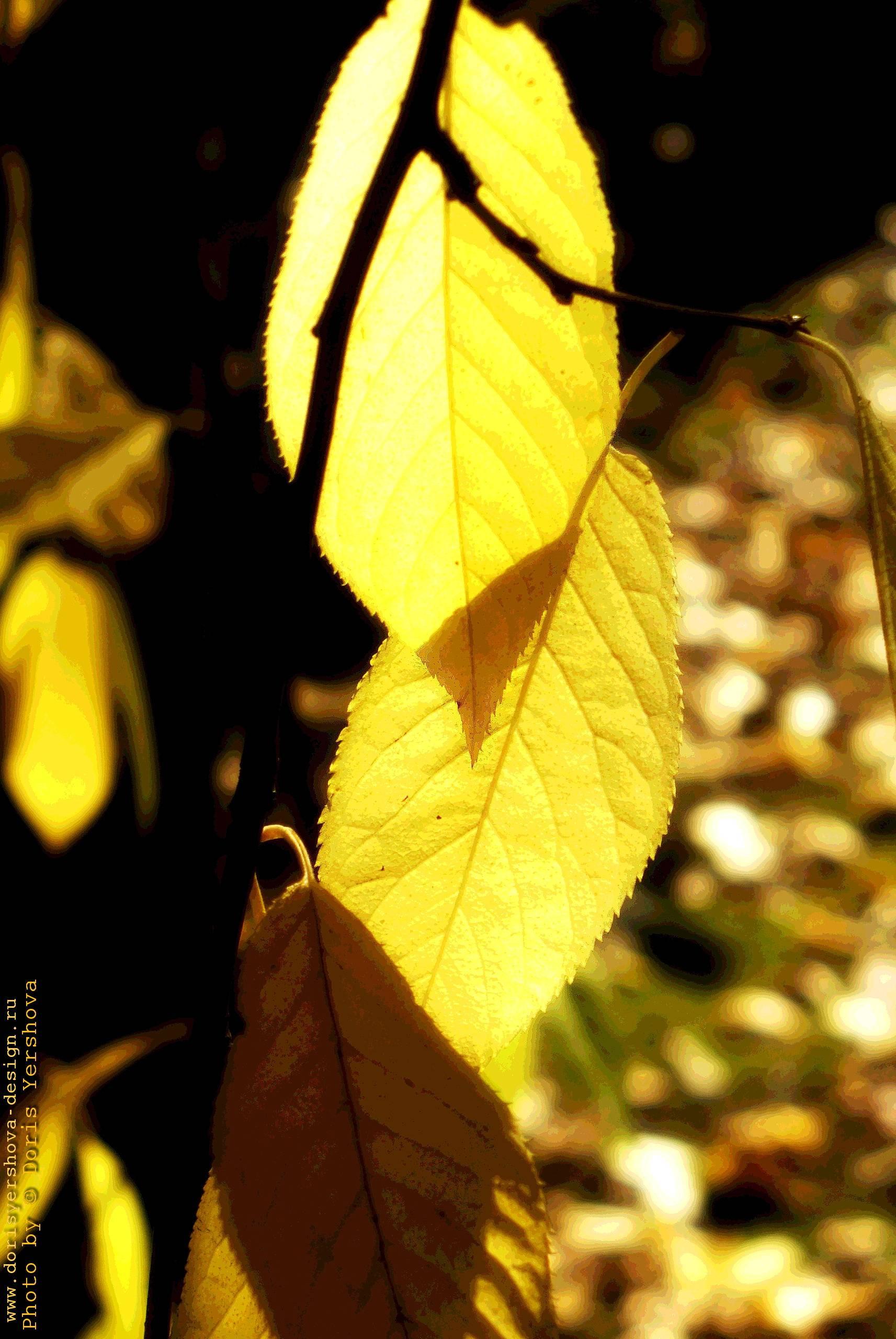 Осеннее солнце. Фото - © Дорис Ершова
