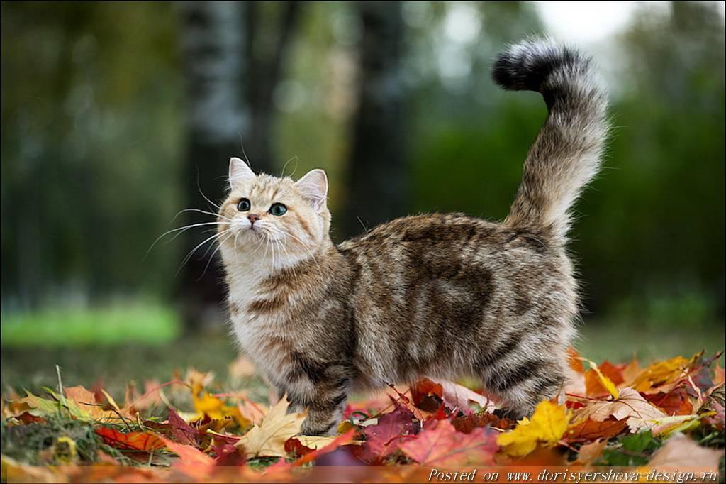 кошка, листья, осень
