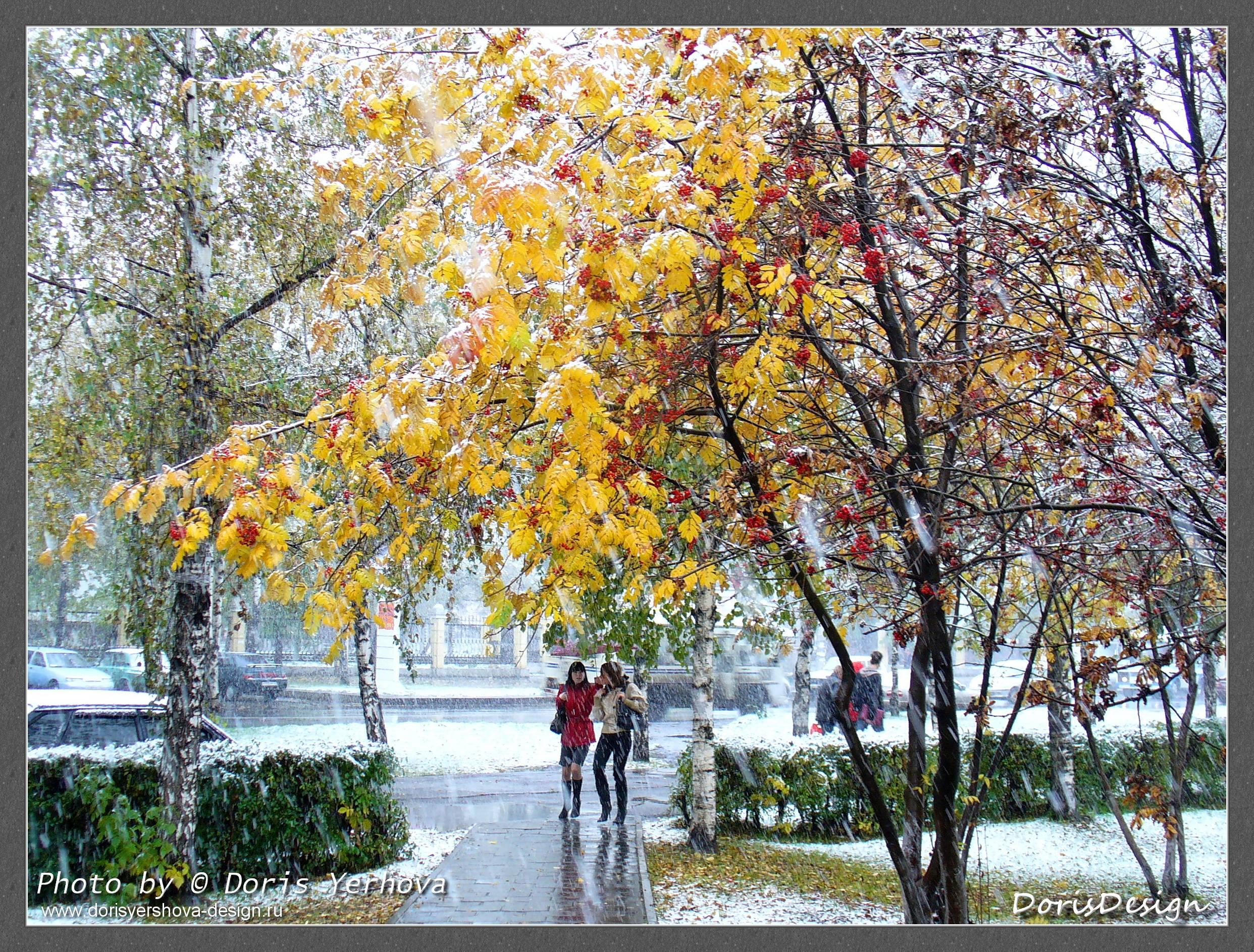 Желтые листья и снег. Фото - © Дорис Ершова